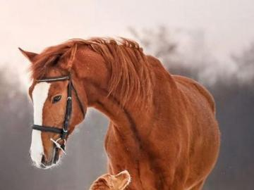 Horse and dog. Great animal friendship - Horse and dog. Great animal friendship