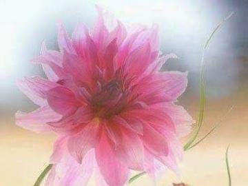 Blumen Herz - Herz aus Blumen Herz aus Blumen
