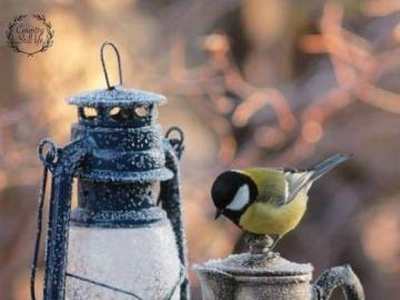 Kleiner Vogel mit Petroleumlampe - Kleiner Vogel mit Petroleumlampe