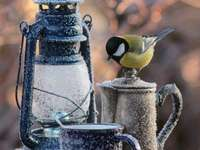 Μικρό πουλί με λάμπα κηροζίνης - Μικρό πουλί με λάμπα κηροζίνης
