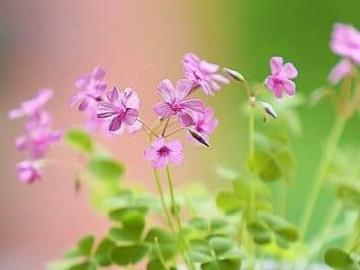 Petites fleurs Petites fleurs - Fleurs Fleur Fleur