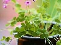 Malé květy Malé květy - Květiny