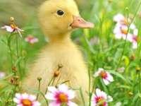 Malé kachní květiny - Malé kachní květiny