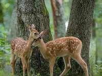 Roe jelen strom přírody - Roe jelen strom přírody