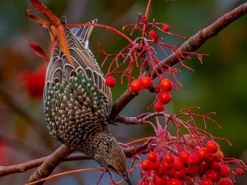 Un bellissimo uccello della natura - Un bellissimo uccello della natura