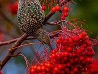 Krásný pták přírody - Krásný pták přírody