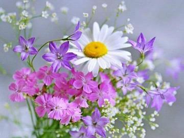 Fleurs, petites fleurs - Fleurs Fleur Fleur