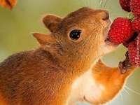 Lekkere frambozen eten met eetlust