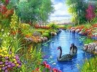 Táj egy fekete hattyú. - Gyönyörű táj. Táj. A tájak sorozatából. A tóban. Táj puzzle. Hattyúk áramlik a növénye