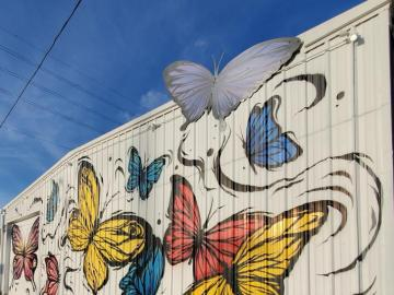 Mariposas en construcción, Estados Unidos - Mariposas coloridas en edificios