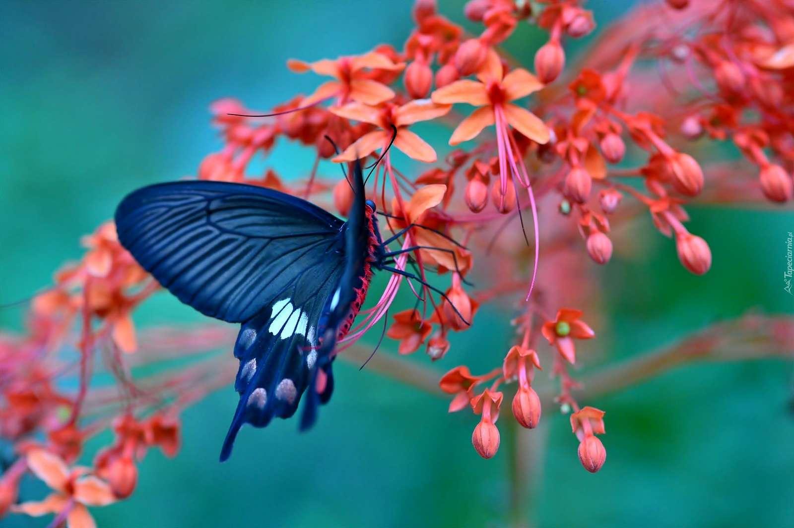 papillon - Fleurs. Fluture. Flori (5×5)