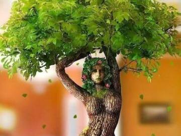 Figura dote - Árbol escultural digno de ver