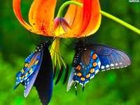 Deux papillons - Puzzle pour enfants. Papillons.