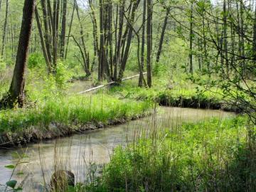 Majowa zieleń - Urokliwy strumień w Roztoczańskim Parku Narodowym