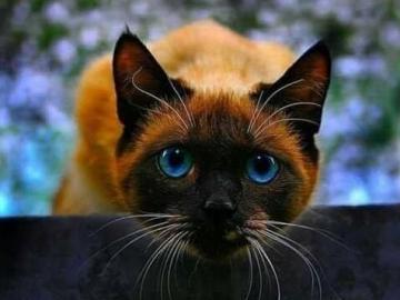Crouching cat. - Animal puzzle. Cat.