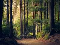 Egy gyönyörű erdei ösvény