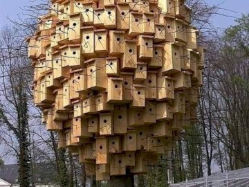 Un pueblo de pájaros. - Un pueblo de pájaros