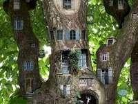 Widok nie codzienny -drzewo zycia - Widok nie codzienny-drzewo zycia