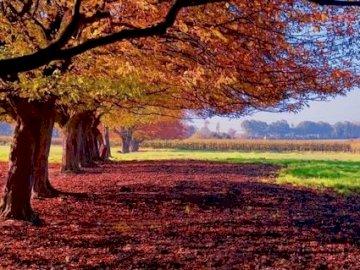 Joli paysage - Ce paysage d'automne est magnifique