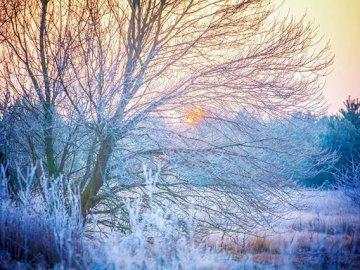 Neige sur l'arbre - Il n'y a pas de neige, l'hiver polonais