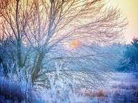 Neve na árvore