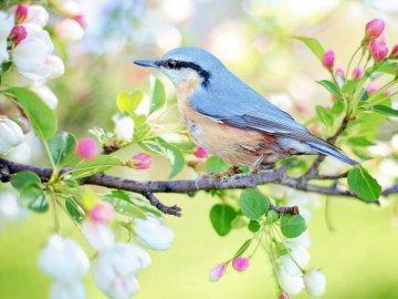 Bird - remorque du printemps - En prévision des oiseaux printaniers