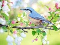 Pássaro - reboque da primavera