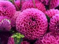 Hermosas flores de color rosa - Flores cortadas de color rosa, decoraciones