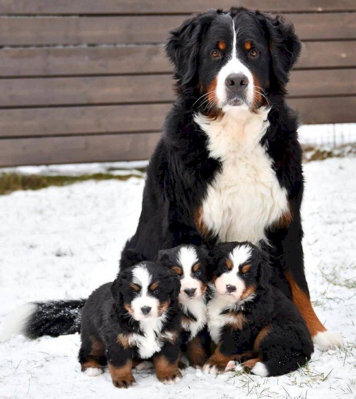 cute dogs with puppies