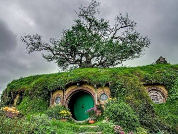 has a green door on the roof is growing a tree - it is covered with grass and has an old tree on the roof