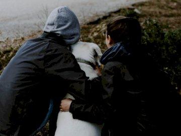 La pandilla - Hombre y mujer con Labrador retriever.