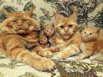 Ein Familienfoto. - Zwierzęca układanka