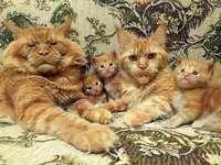 Een familiefoto.