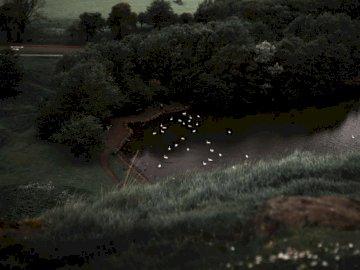 Jezioro wypełnione strzałami łabędzi - Zdjęcie lotnicze stada ptaków przelatujących nad zbiornikiem wodnym. Minnesota