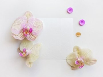 Flat lay photo - sheet of - Beige orchid flowers on white surface. Ukraine