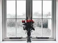 Roses de la Saint-Valentin
