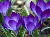 fleurs  - květiny