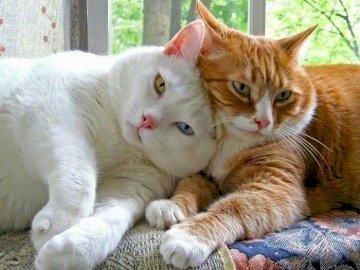 Zwei Katzen. - Tierpuzzle: Katzen.