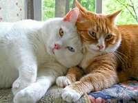 Twee katten.