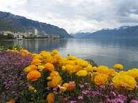 Schweiz. Montreux.