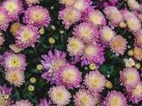 Oogverblindende roze bloemen met