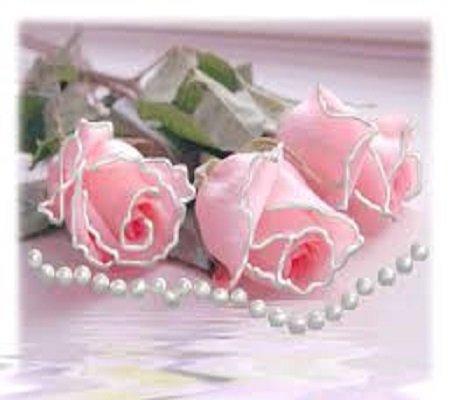 Roses                    ,