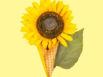 Trato de otoño - Girasol amarillo en cono de helado marrón. NE Ohio, EE. UU.