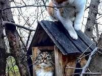 Katter på trädet. - Pussel för barn: katter.