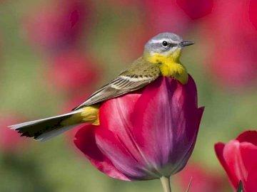 Fleurs et tulipes d'oiseaux - Fleurs et tulipes d'oiseaux