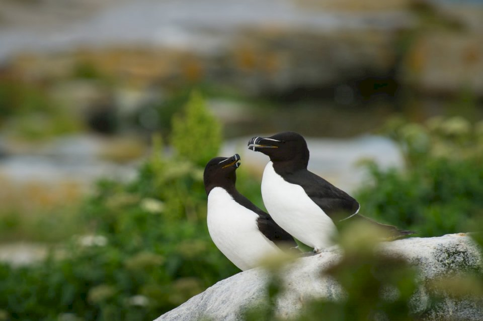 Une paire de pingouins stand