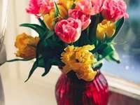 Tulipány v okně - Kytice tulipánů na parapetu