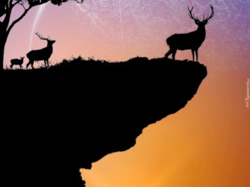 Cerfs communs  - Deer On The Rock Looking Into The Sky