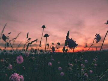 Αεράκι, λουλούδια