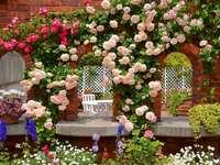 Lezecké růže. - Puzzle. Květina. Lezecké růže.